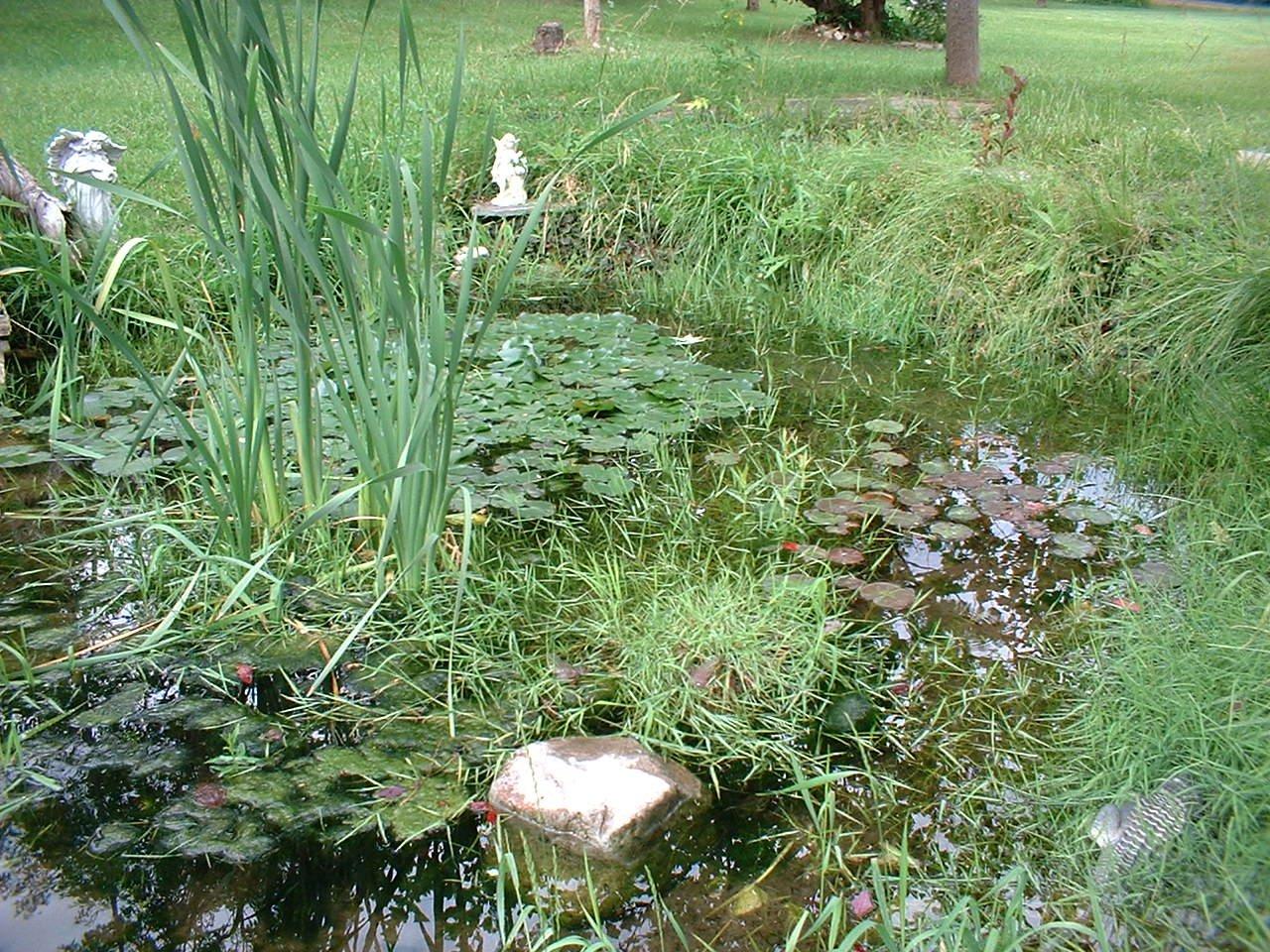 Frog Pond Backyard the frog pond | coach michele